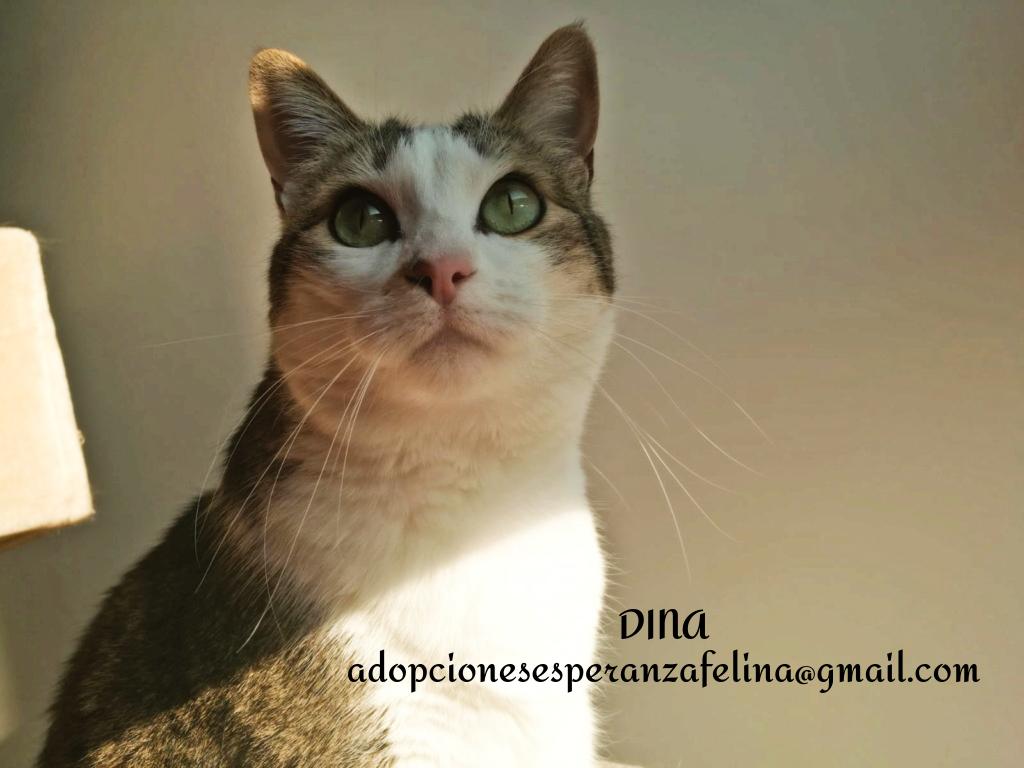 Dina, preciosa gata busca su hogar (Álava, fecha de nacimiento aproximada 10/04/2014 ) - Página 2 Dina_e17
