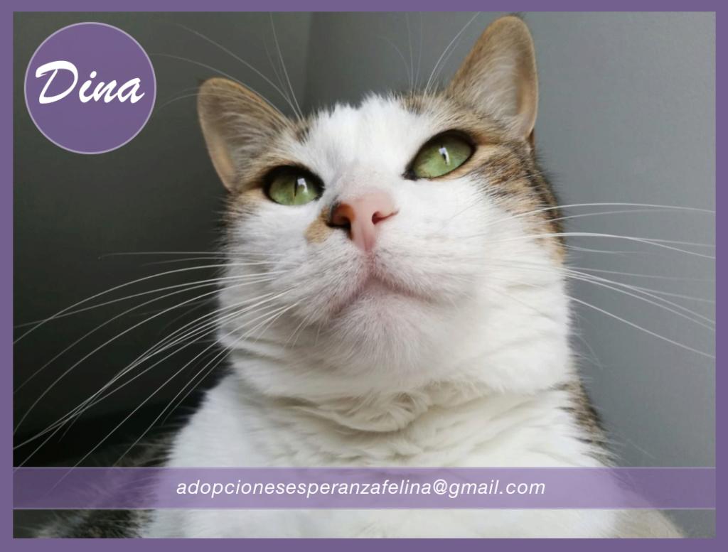 Dina, preciosa gata busca su hogar (Álava, fecha de nacimiento aproximada 10/04/2014 ) - Página 2 Dina_e18