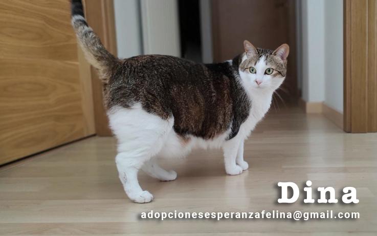 Dina, preciosa gata busca su hogar (Álava, fecha de nacimiento aproximada 10/04/2014 ) - Página 2 Dina_e20