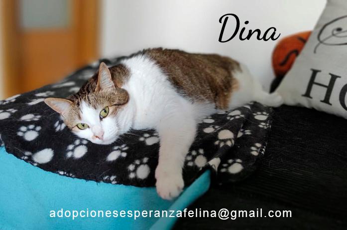 Dina, preciosa gata busca su hogar (Álava, fecha de nacimiento aproximada 10/04/2014 ) - Página 2 Dina_e21