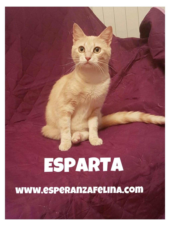 Esparta, preciosa gatita rubia. Álava Espart11