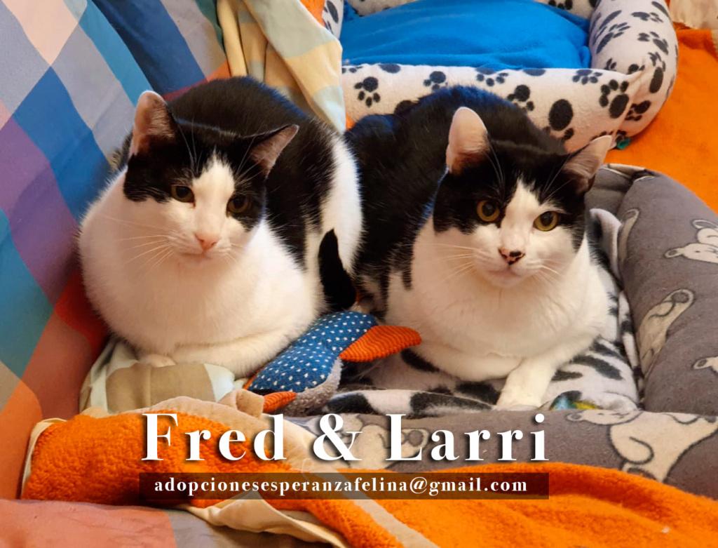 Fred y Larri, hermanitos en adopción (Álava-España f.n.aprox 09/03/15)  Fred-y10