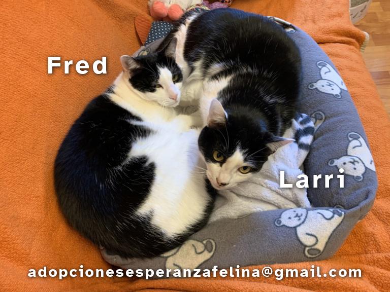 Fred y Larri, hermanitos en adopción (Álava-España f.n.aprox 09/03/15)  Fred-y11