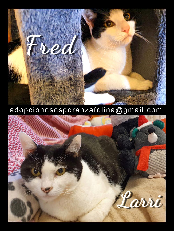 Fred y Larri, hermanitos en adopción (Álava-España f.n.aprox 09/03/15)  Fred_y10