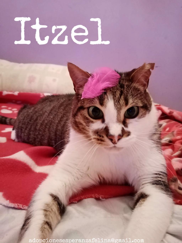 Itzel, preciosidad gatuna. Álava. (Fec. Nac. Aprox. 01/07/2012) - Página 2 Image311
