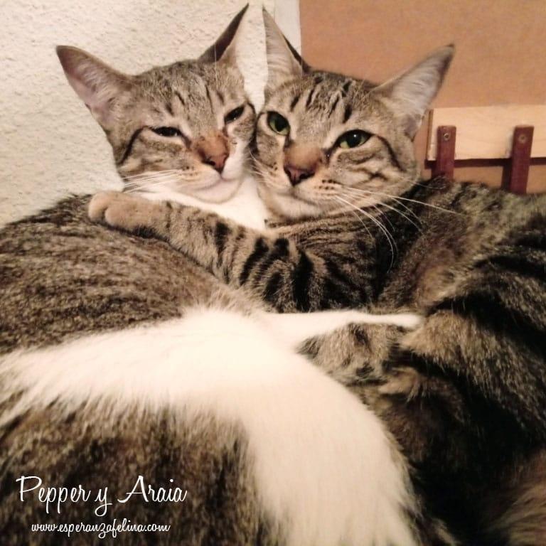 Araia y Pepper, preciosas gatitas buscan hogar. Alava (Fec. Nac. Aprox. 14/04/2018) Img-2012