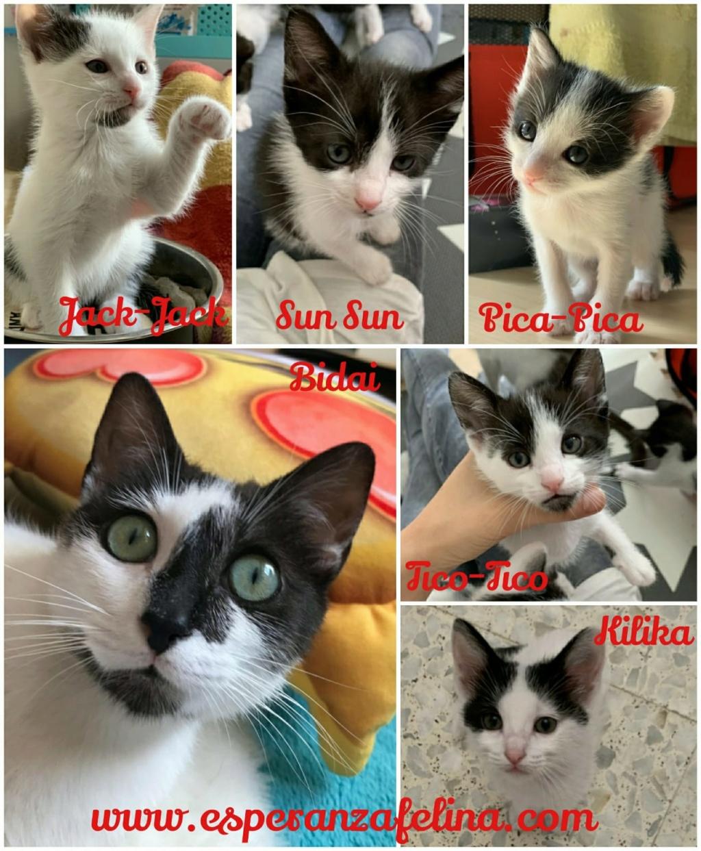 Bidai, Kilika, Tico-Tico, SunSun, Jack-Jack y Pica-Pica. Álava-España (F.N: 08/2018 y 05/2019) Img-2014