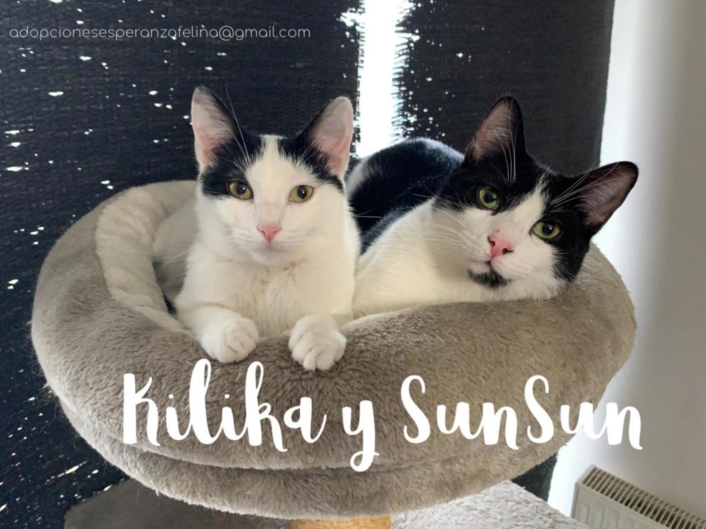 Kilika y SunSun, dos amores en adopción (F. N.13/05/2019 Álava, Esp.)   Img-2015
