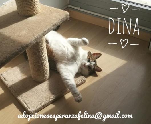Dina, preciosa gata busca su hogar (Álava, fecha de nacimiento aproximada 10/04/2014 ) - Página 2 Img-2016