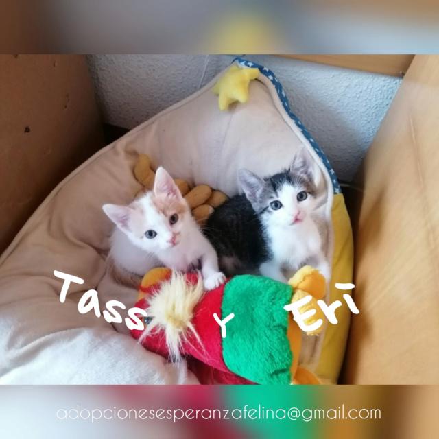 Tass y Eri, bellezones en adopción. (F.N.Aprox. 16/08/2020) Álava. Incoll19