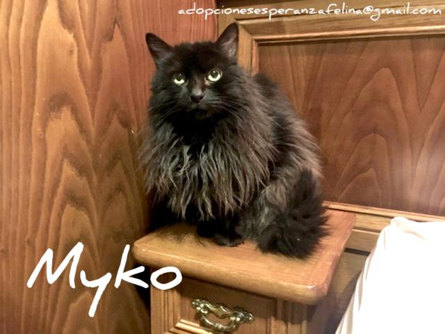 Myko, abueleta en adopción. (F. N. Aprox. (22/01/07) Incoll20