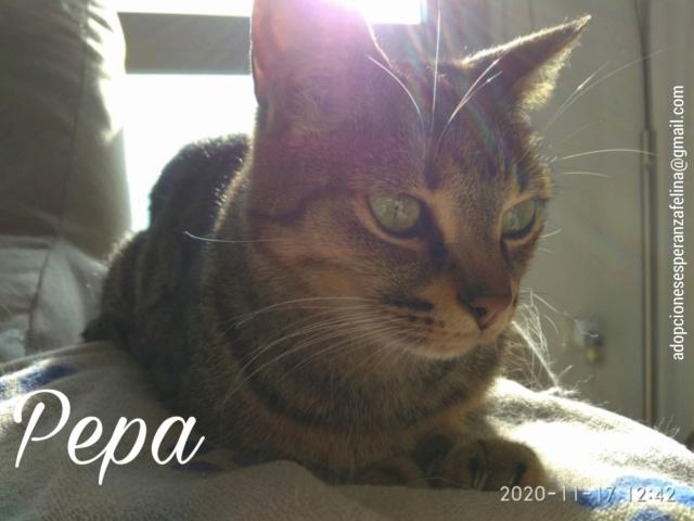 Pepa,preciosa gatita necesita hogar (f.n.aprox 28/04/13) - Página 2 Incoll28