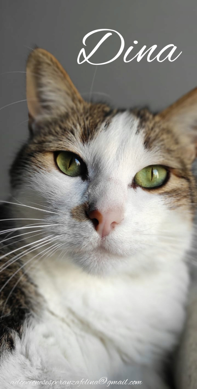 Dina, preciosa gata busca su hogar (Álava, fecha de nacimiento aproximada 10/04/2014 ) - Página 2 Incoll29