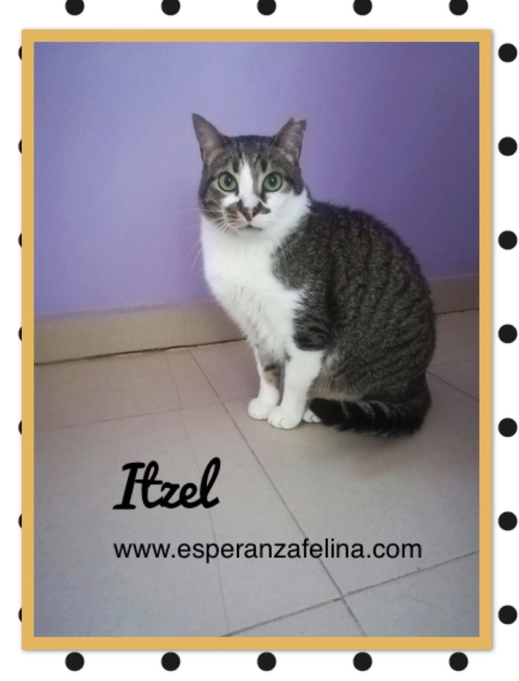 Itzel, preciosa gatita. Álava. (Fec. Nac. Aprox. 01/07/2012) Itzel_10