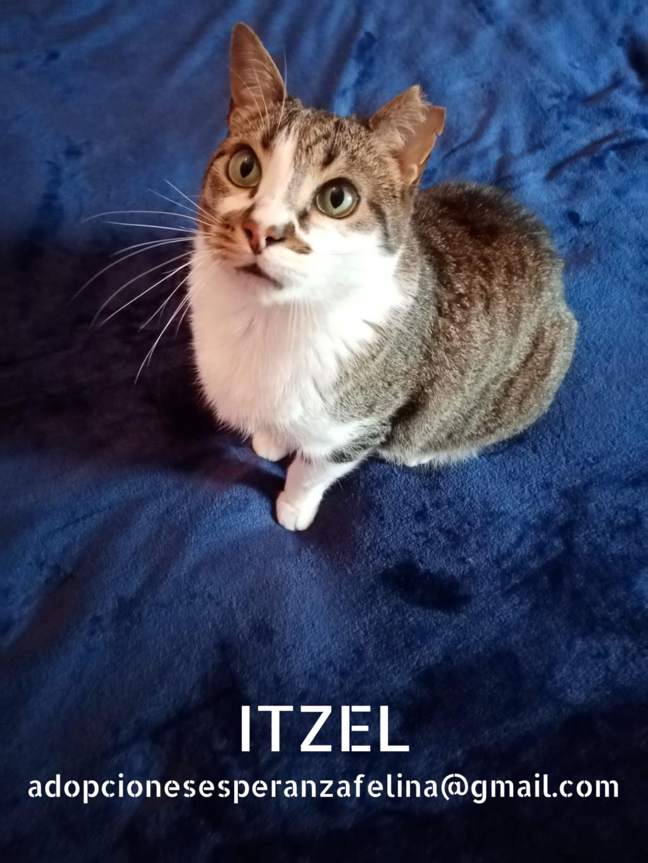 Itzel, preciosidad gatuna. Álava. (Fec. Nac. Aprox. 01/07/2012) - Página 2 Itzel_19
