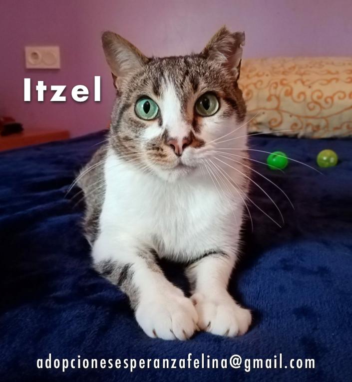 Itzel, preciosidad gatuna. Álava. (Fec. Nac. Aprox. 01/07/2012) - Página 2 Itzel_20