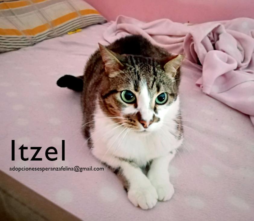 Itzel, preciosidad gatuna. Álava. (Fec. Nac. Aprox. 01/07/2012) - Página 2 Itzel_21