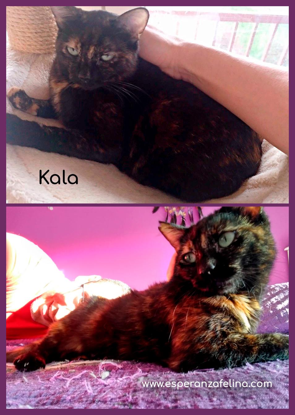 Kala, preciosa carey (Fec. Nac. Aprox. 01/01/2017) Kala_e10