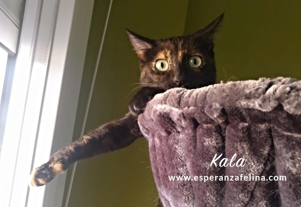 Kala, preciosa carey (Fec. Nac. Aprox. 01/01/2017) Kala_e11