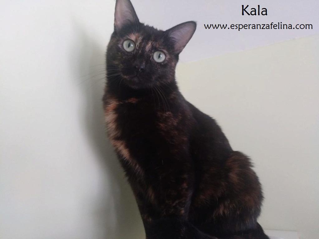 Kala, preciosa carey (Fec. Nac. Aprox. 01/01/2017) Kala_e14
