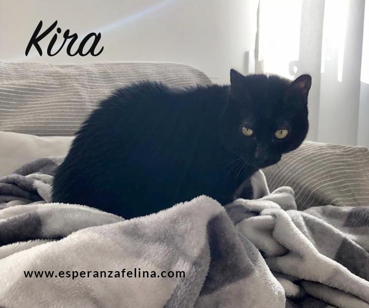 Kira, panterita en adopción (F.N. 25-07-10) Kira_e10