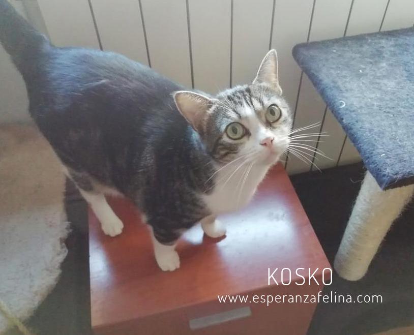 Koskorron, peluche en adopción +INMUNO ( Alava) ( F.N.aprox. 01/15) Kosko_10