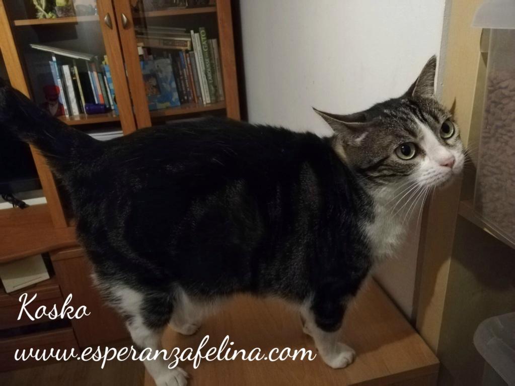 Koskorron, peluche en adopción +INMUNO ( Alava) ( F.N.aprox. 01/15) Kosko_14
