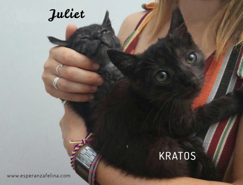 Kratos y Juliet, pareja de panteritas en adopción. Alava (FN aprox.: 1/7/2018) Kratos10