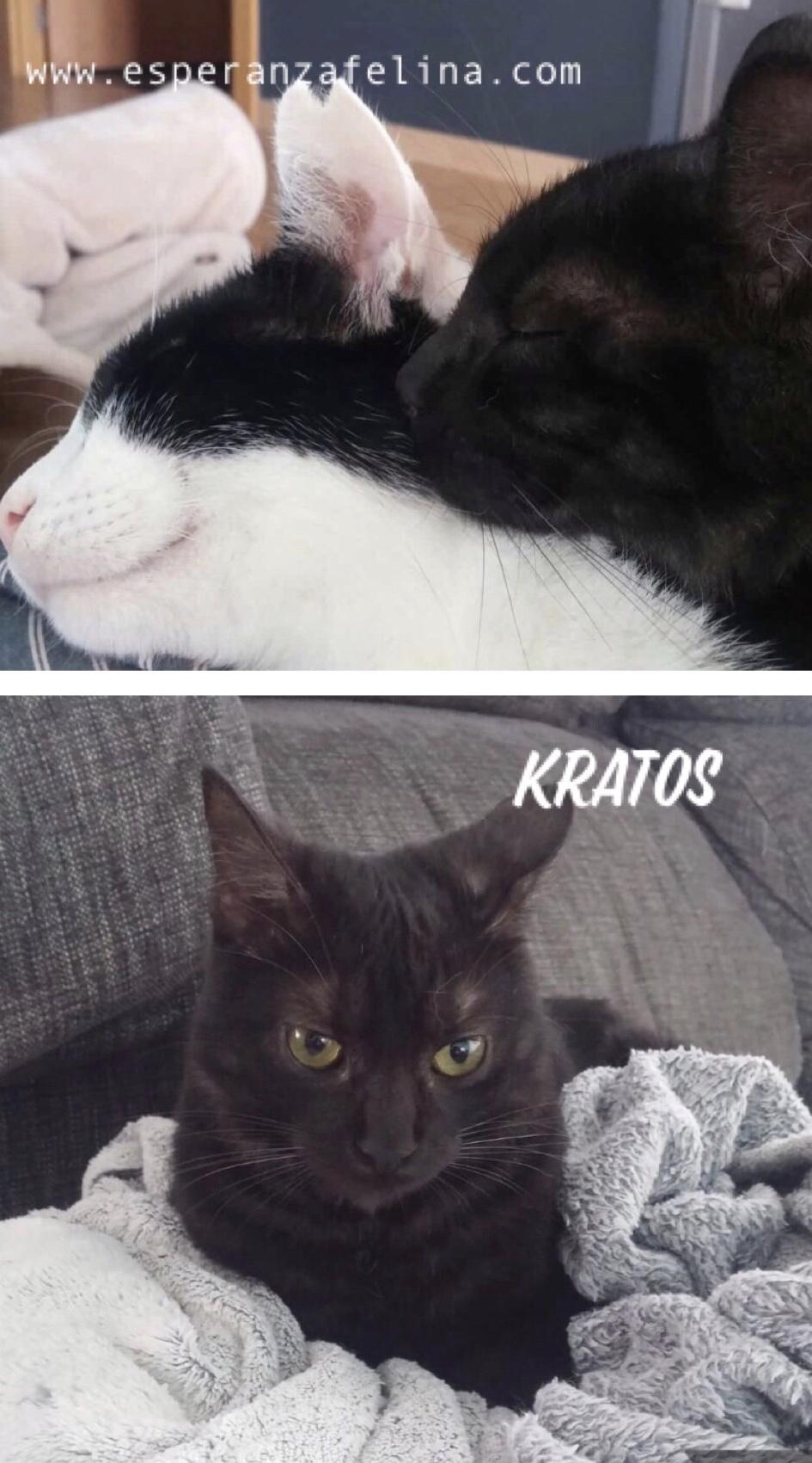 Kratos, tierna panterita en adopción  (f.n.aprox 01/05/18) Kratos11