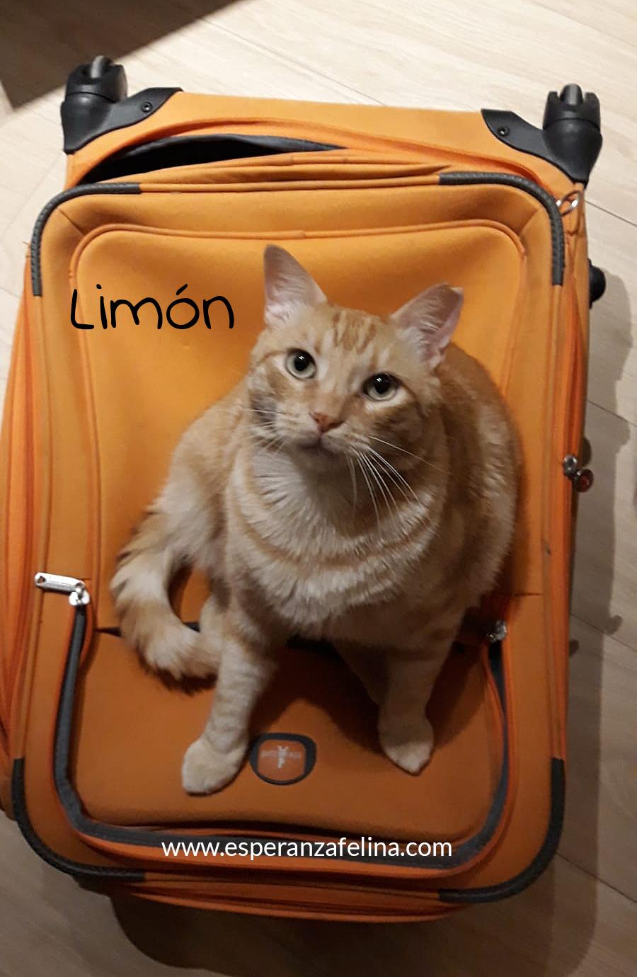 Limón 2, rubito adorable busca hogar. Alava. (Fec. Nac. Aprox. 01/01/2015) Limon_18