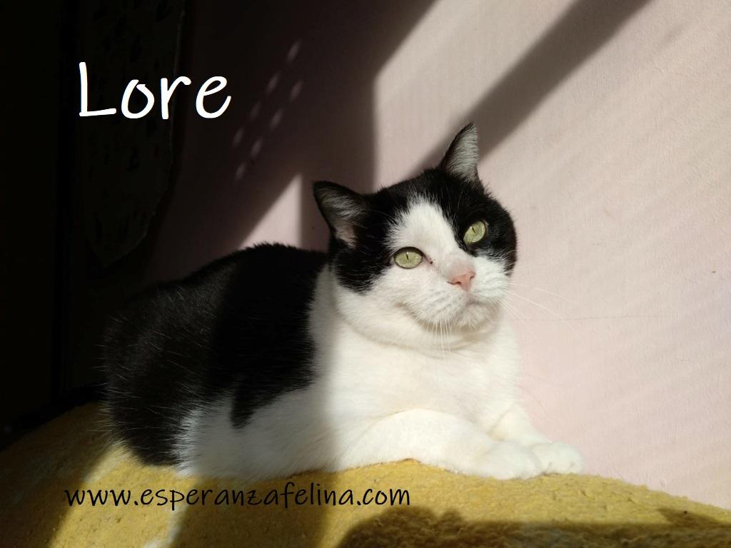 Lore, preciosa vaquita luchadora en adopción (Álava, F.N aprox. 2/04/12) Lore_e10