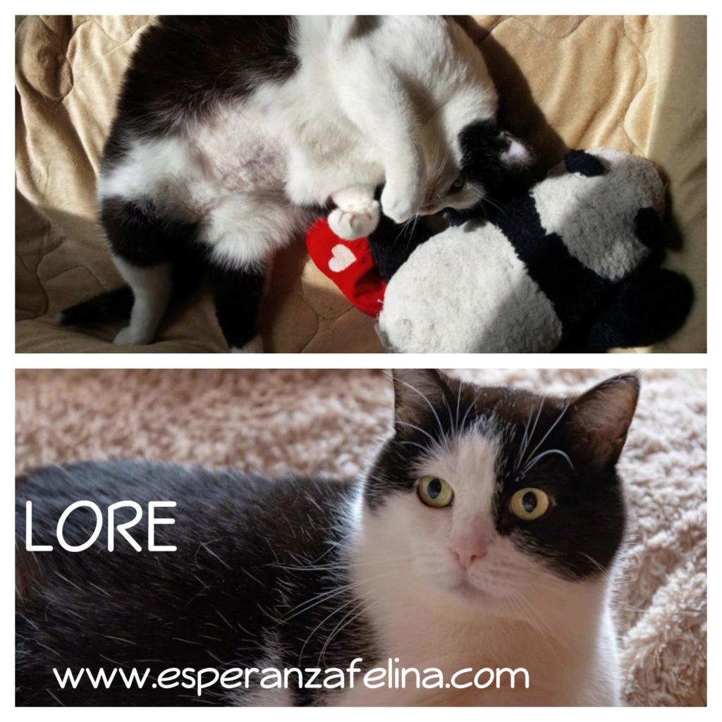 Lore, preciosa vaquita luchadora en adopción (Álava, F.N aprox. 2/04/12) Lore_e11