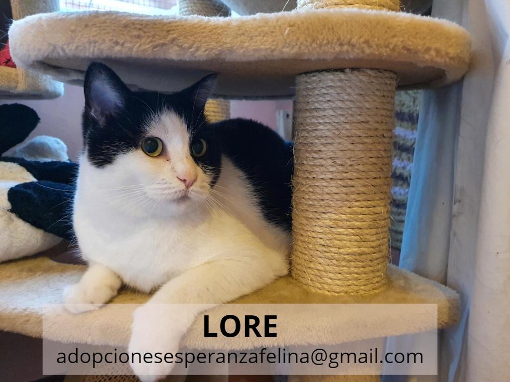 Lore, preciosa vaquita luchadora en adopción (Álava, F.N aprox. 2/04/12) - Página 2 Lore_e15