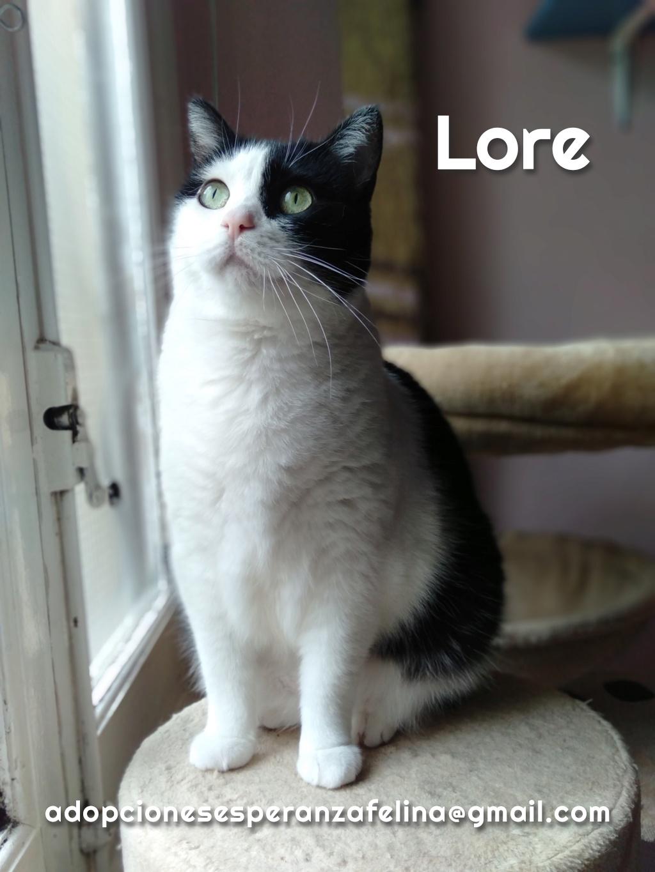Lore, preciosa vaquita luchadora en adopción (Álava, F.N aprox. 2/04/12) - Página 2 Lore_e16