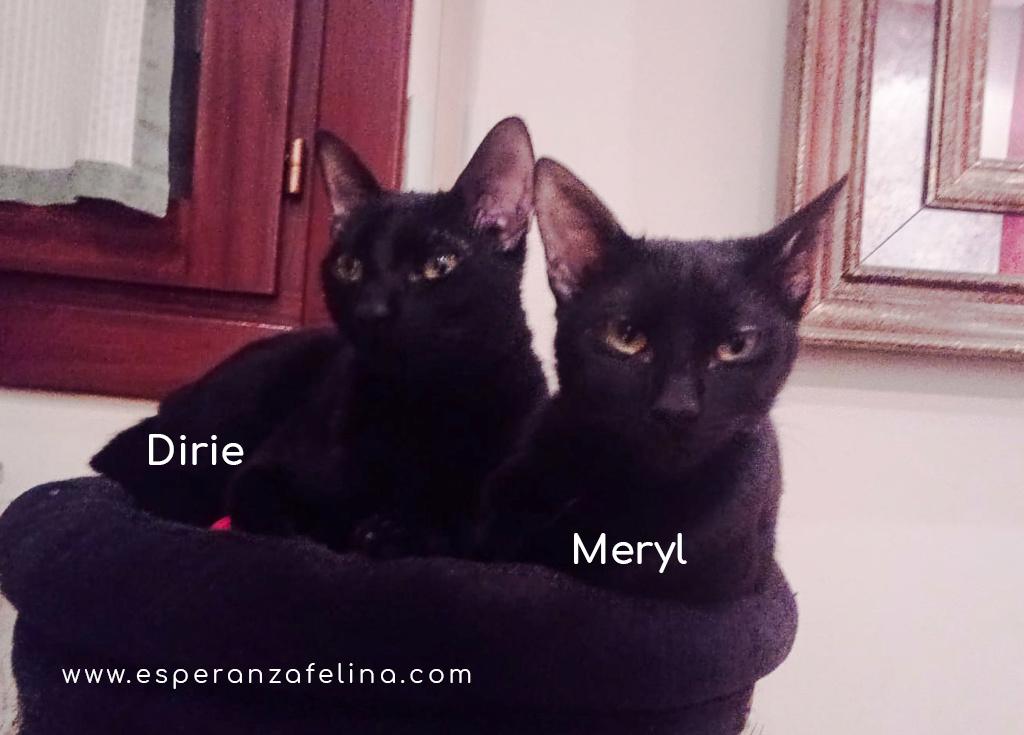 Dirie y Meryl preciosas panteras en adopción.  (Álava, F.N  17/06/2018) Mery_y10