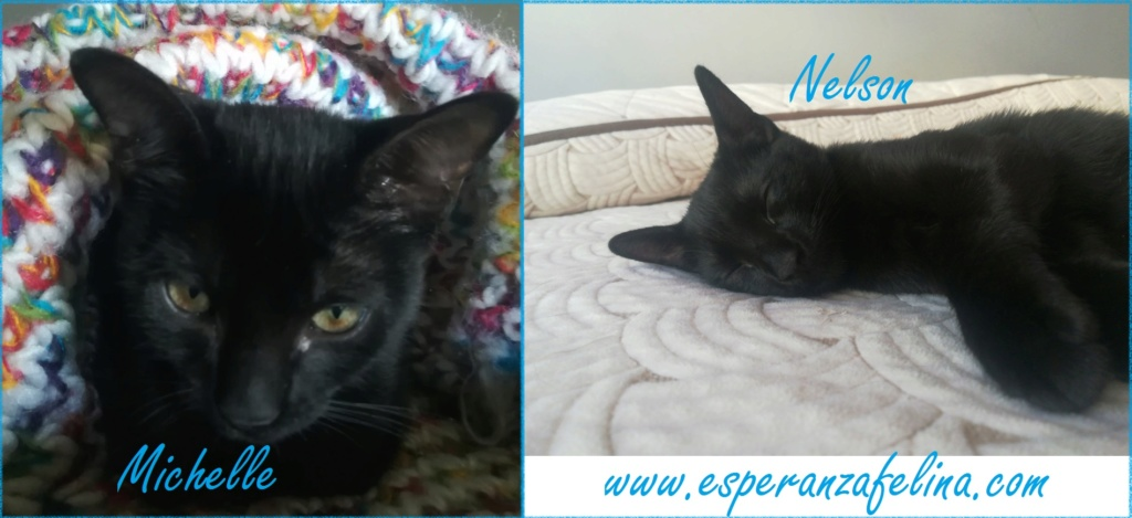 Nelson y Michelle parejita adorable en adopcion  (Alava F.N. 17/06/2018) Michel10