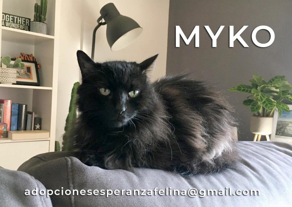 Myko, abueleta en adopción. (F. N. Aprox. (22/01/07) Miko_e10