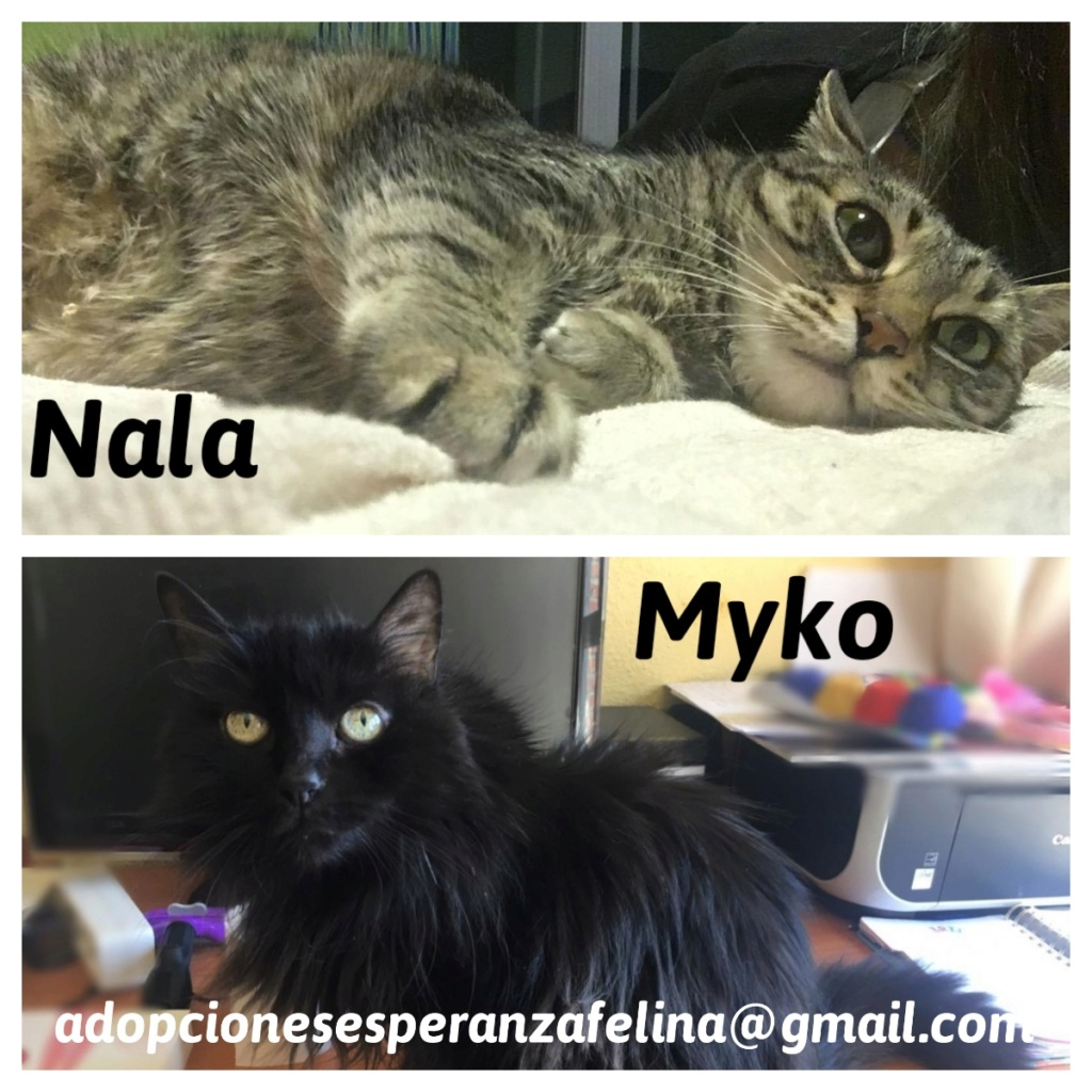 Myko y Nala, preciosas peques en adopción. Álava-España (F.N: 22/01/07 y 28/04/11) Moldiv12