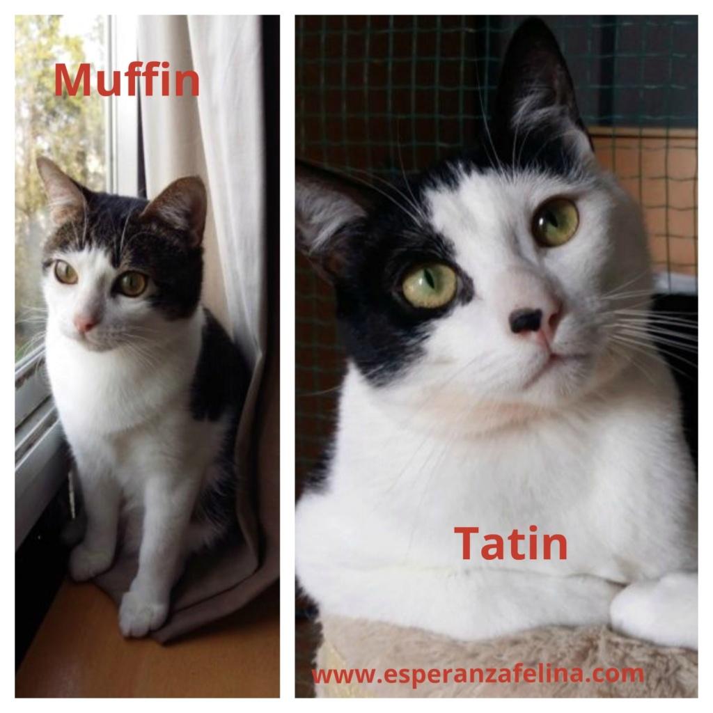 *Muffin y Tatín (Pastelitos). Cachorritos supermimosos buscan familia. Álava (F.N. aprox: 12/05/2018) Muffin11