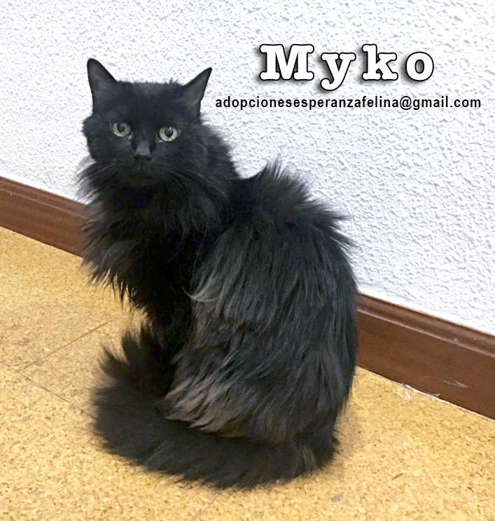 Myko, abueleta en adopción. (F. N. Aprox. (22/01/07) Myko_e10