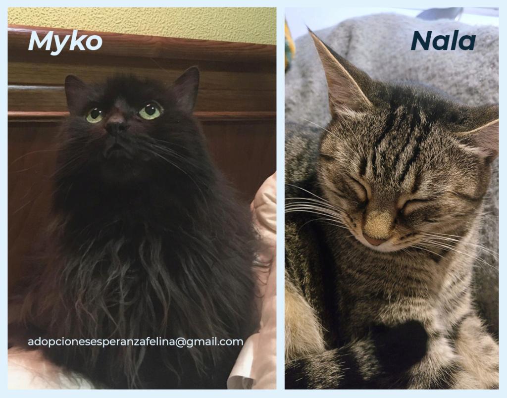 Myko y Nala, preciosas peques en adopción. Álava-España (F.N: 22/01/07 y 28/04/11) Myko_y13