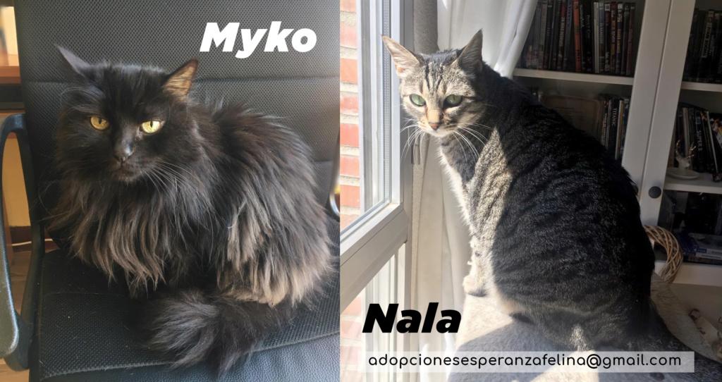 Myko y Nala, preciosas peques en adopción. Álava-España (F.N: 22/01/07 y 28/04/11) Myko_y14