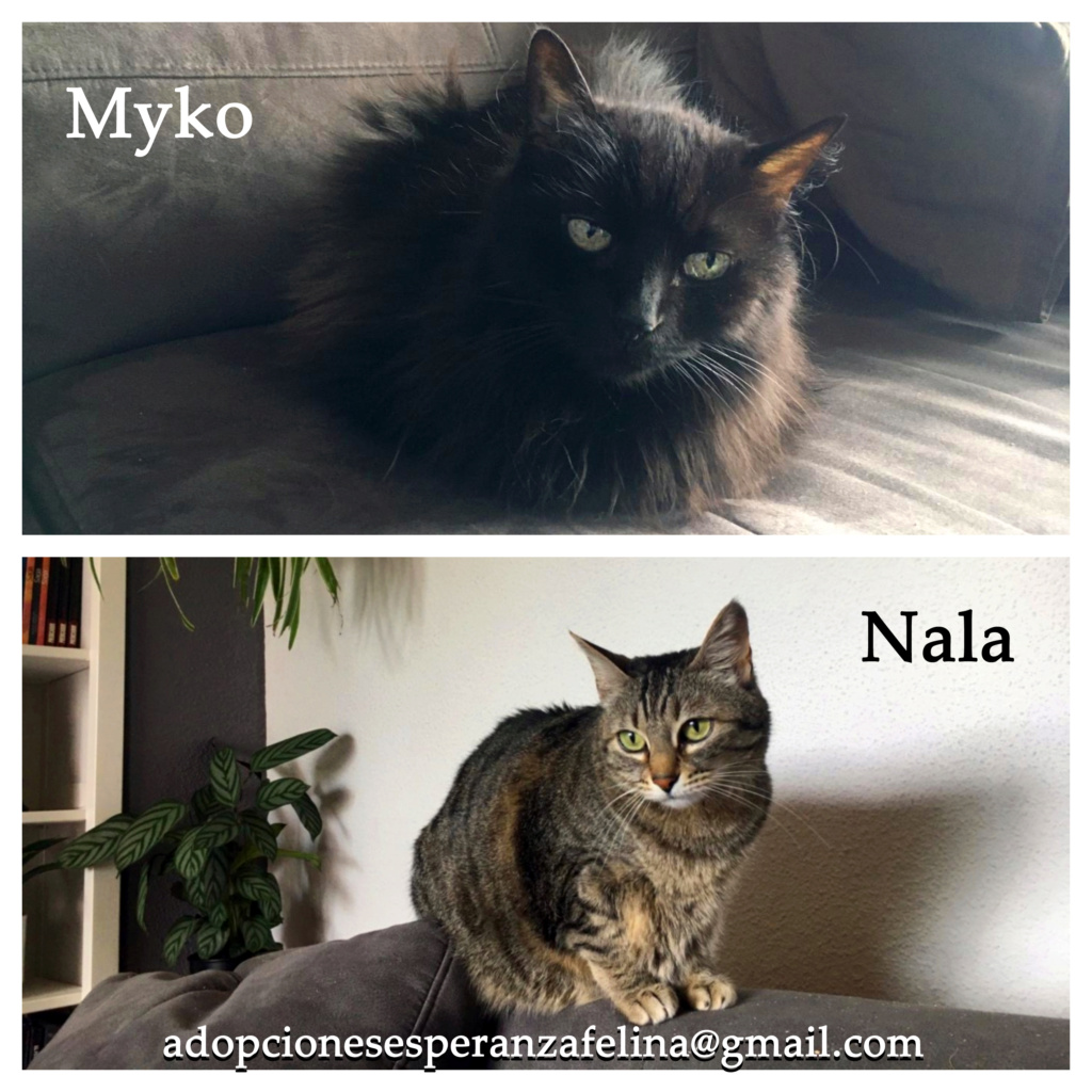 Myko y Nala, preciosas peques en adopción. Álava-España (F.N: 22/01/07 y 28/04/11) Myko_y15