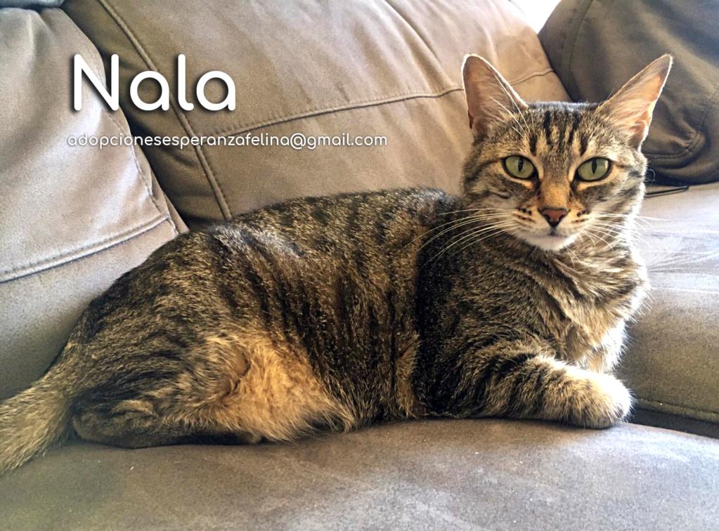 Nala, preciosa gatita en adopción. Álava-España (F.N: 28/04/11) Nala_e10