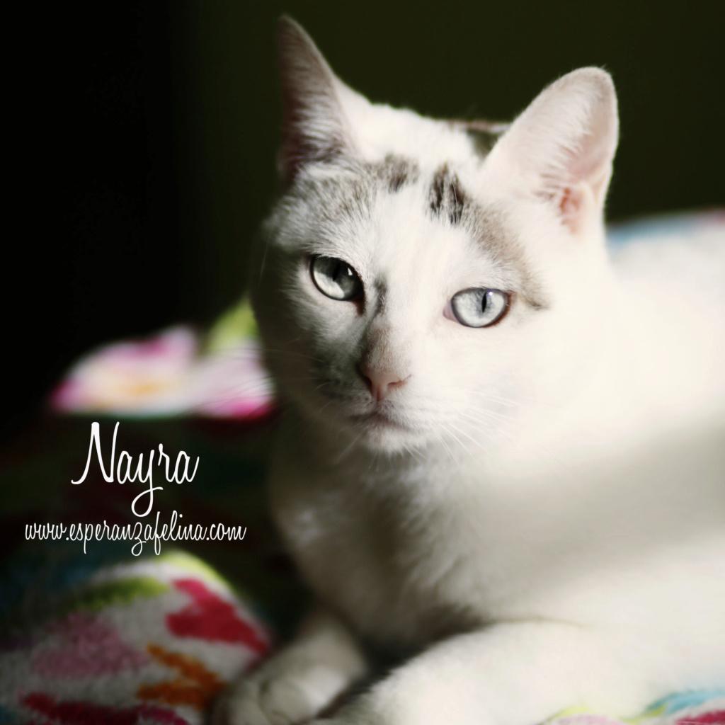 Nayra, gatita de ojos cautivadores en adopción. Alava (Fecha Nac. aprox: 11-08-2015) Nayra11