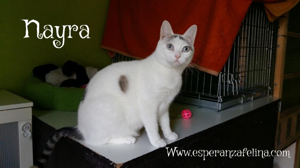 Nayra, gatita de ojos cautivadores en adopción. Alava (Fecha Nac. aprox: 11-08-2015) Nayra12