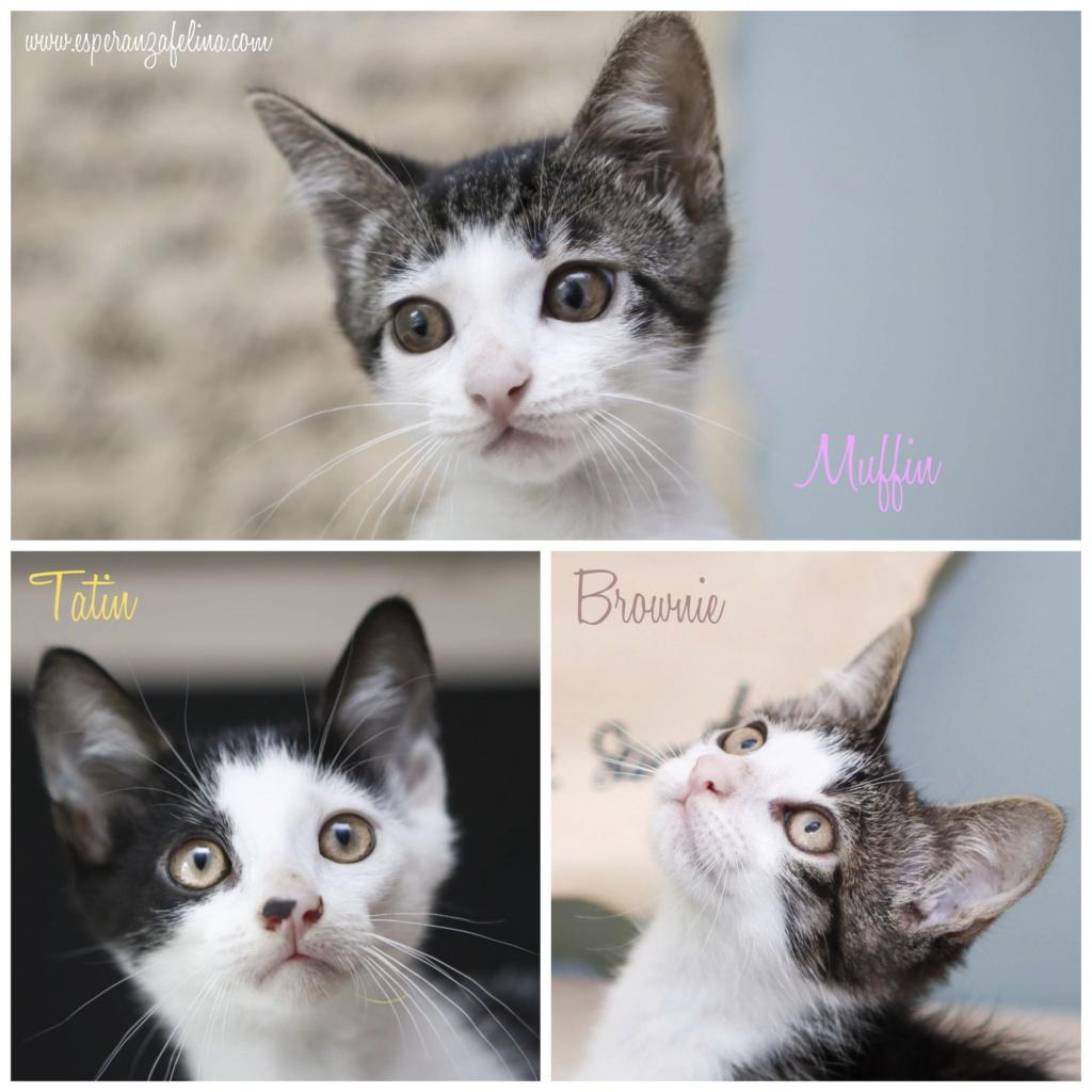 *Muffin y Tatín (Pastelitos). Cachorritos supermimosos buscan familia. Álava (F.N. aprox: 12/05/2018) Pastel11
