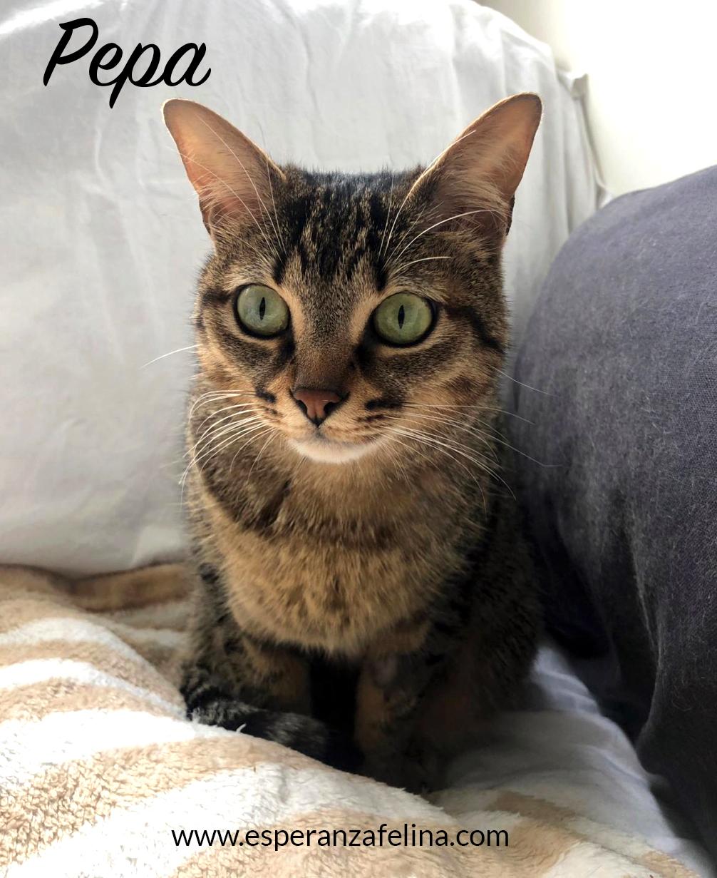 Pepa,preciosa gatita necesita hogar (f.n.aprox 28/04/13) Pepa_e10