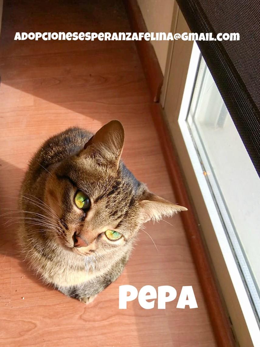 Pepa,preciosa gatita necesita hogar (f.n.aprox 28/04/13) Pepa_e11