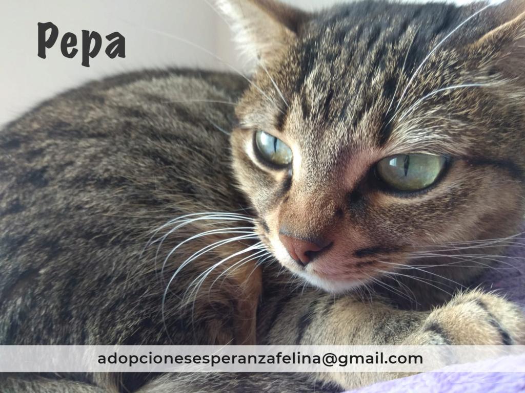 Pepa,preciosa gatita necesita hogar (f.n.aprox 28/04/13) Pepa_e12